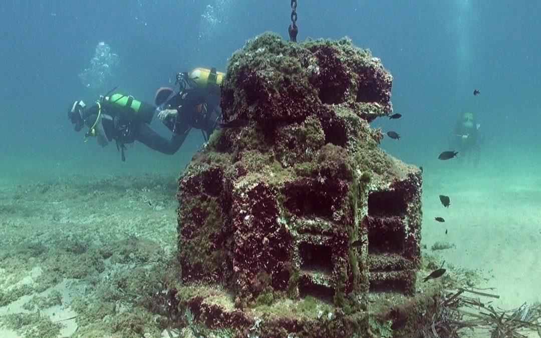 Repsol instala más de cien biotopos para atraer fauna y flora marinas
